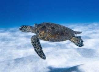 telecamere Hikvision per monitoraggio tartarughe Lampedusa